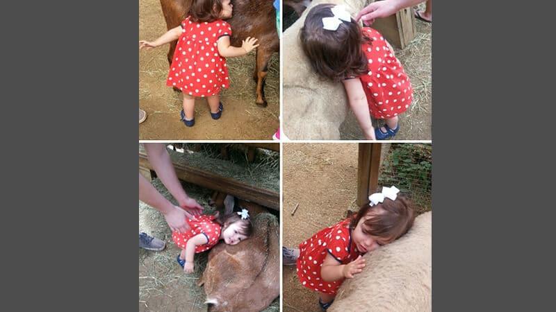 Foto foto bayi lucu - bantal hewan