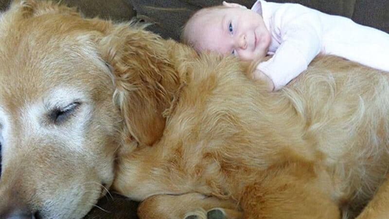 Foto foto bayi lucu - Tidur di badan anjing
