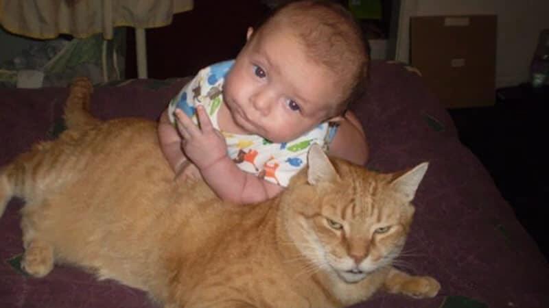 Foto foto bayi lucu - Bayi dan kucing