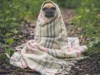 Gambar Hewan Peliharaan Lucu - Anjing Selimutan