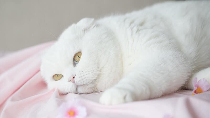 Gambar Hewan Peliharaan Lucu - Kucing Galau