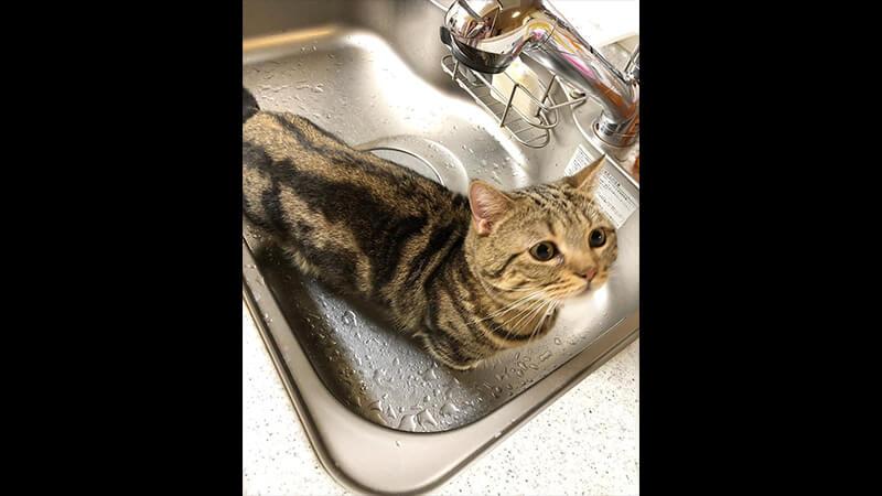 Gambar Hewan Peliharaan Lucu - Kucing di Wastafel