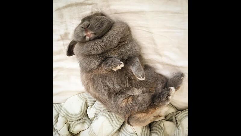 Gambar Hewan Peliharaan Lucu - Kelinci Tidur
