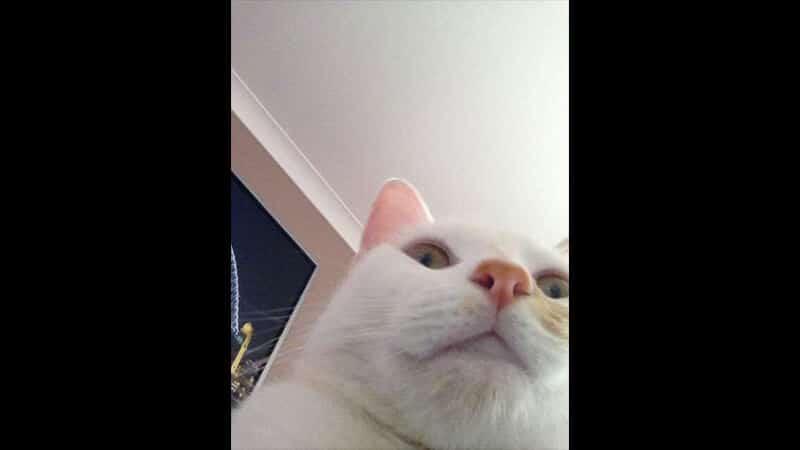 Gambar Hewan Peliharaan Lucu - Kucing Selfie
