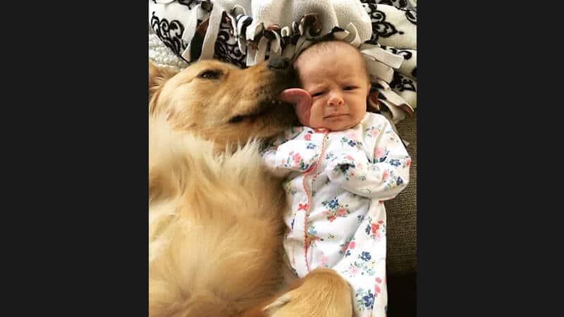 Foto foto gokil bikin ngakak - Anjing menjilat bayi