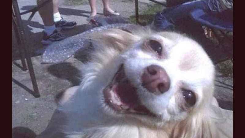 Foto Foto Lucu Banget Bikin Ngakak - Anjing Senyum