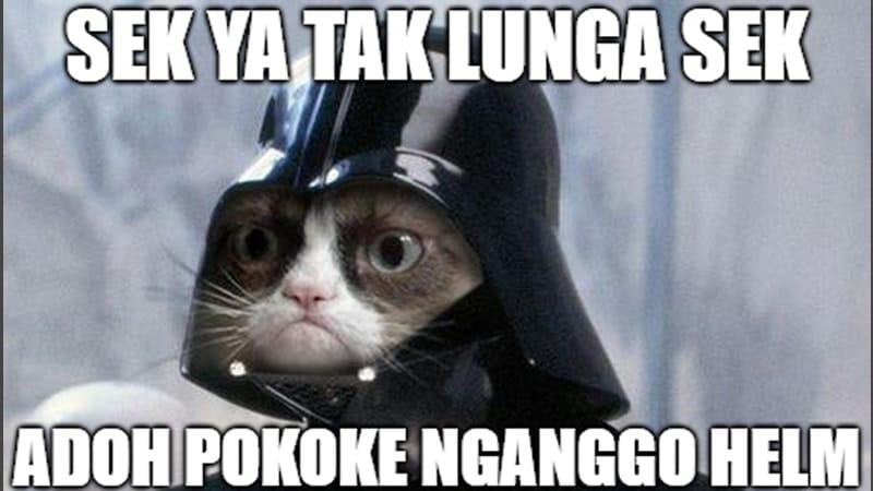 Meme Lucu Bahasa Jawa - Kucing Berhelm