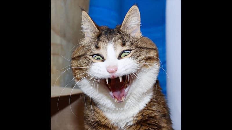 Kumpulan Foto Foto Lucu - Kucing Dramatis