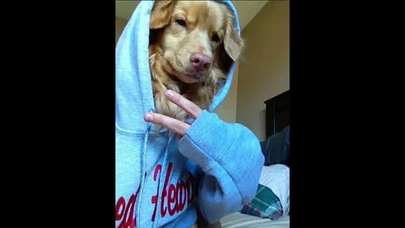 Kumpulan Foto Foto Lucu - Anjing Selfie