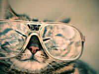 Foto Foto Kucing Lucu - Kucing Pakai Kacamata
