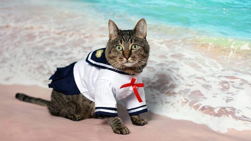 Foto Foto Kucing Lucu - Kucing Cosplay Jadi Pelaut