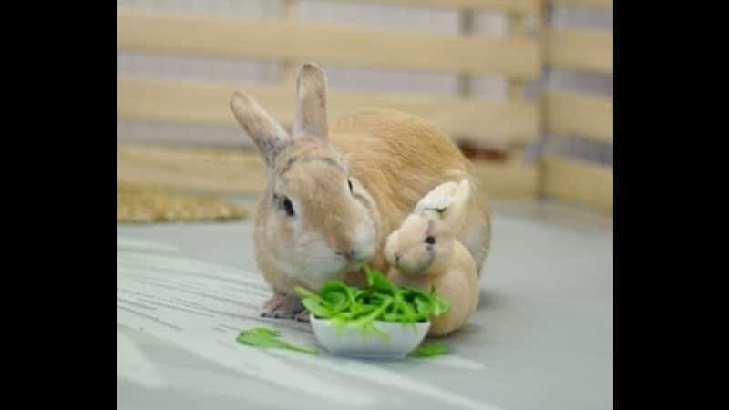 Gambar Kelinci Lucu dan Imut - Kelinci Makan Bayam