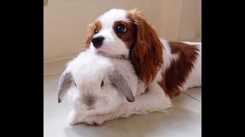 Gambar Kelinci Lucu dan Imut - Kelinci dan Anjing