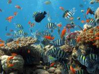 Macam-Macam Ikan Hias Air Laut - Ikan Laut