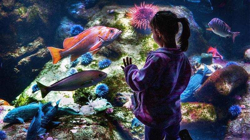 Macam-Macam Ikan Hias Air Laut - Ikan Hias dalam Akuarium