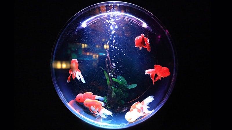 Macam-Macam Ikan Hias Air Laut - Akuarium Kecil