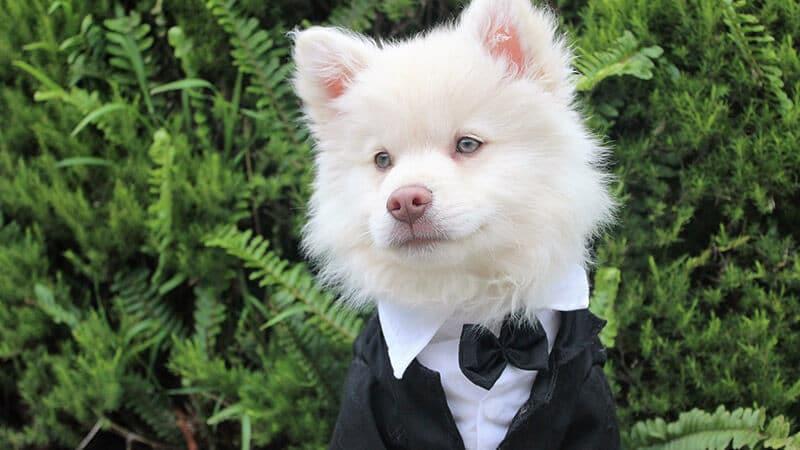 Gambar anjing lucu dan imut - Hewan berdasi