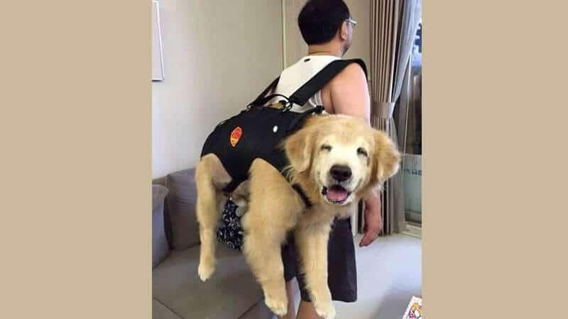 Gambar anjing lucu dan imut - Hewan yang senang digendong