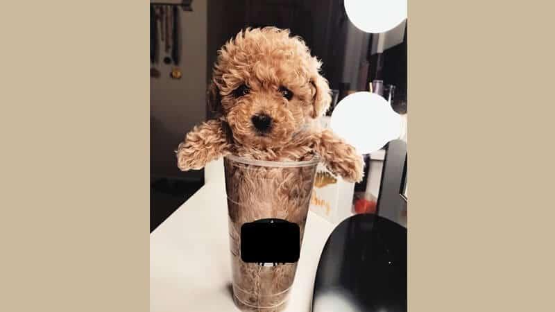 Gambar anjing lucu dan imut - Terjebak dalam gelas