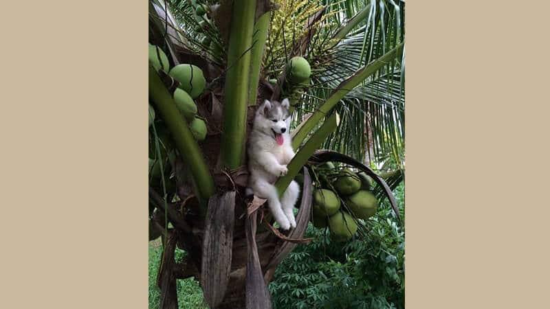 Gambar anjing lucu dan imut - Tersangkut di atas pohon