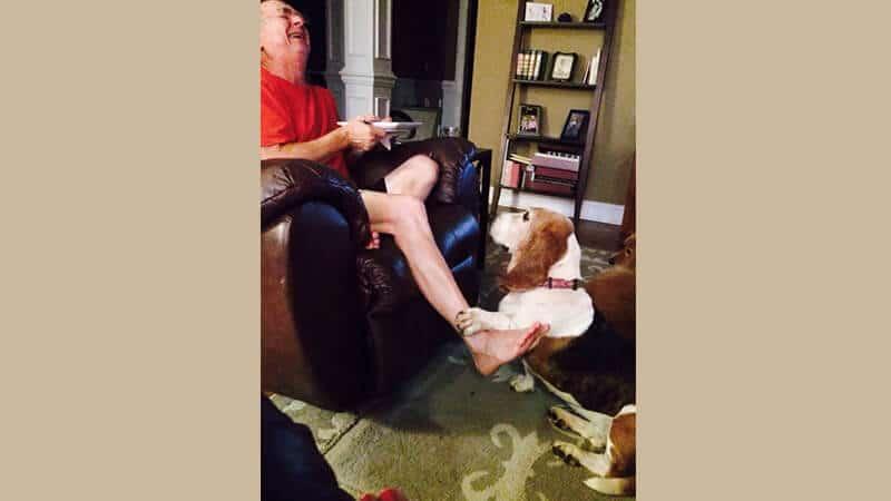 Gambar anjing lucu dan imut - Beagle memelas
