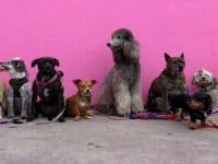 Jenis jenis anjing peliharaan - Kumpulan anjing