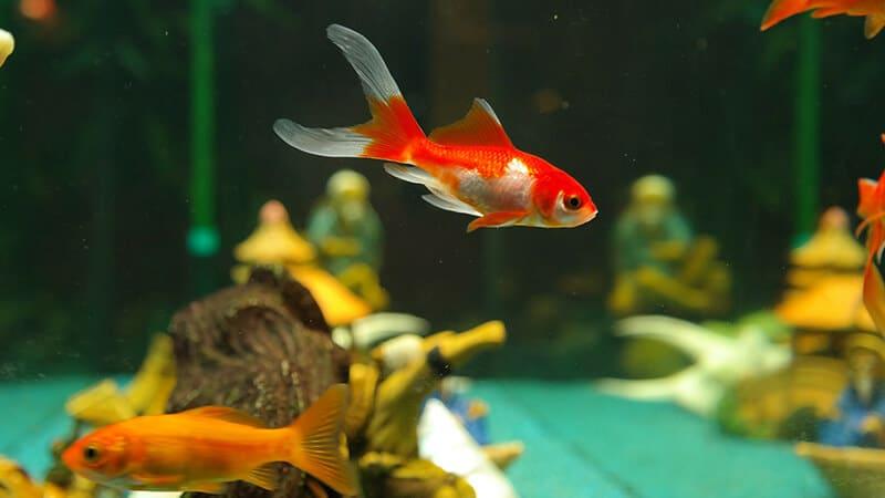 Jenis Jenis Ikan - Ikan di Akuarium