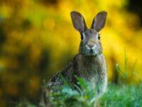 Jenis jenis kelinci - Kelinci di taman