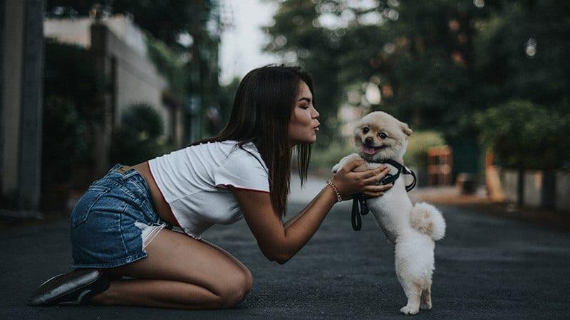 Jenis jenis anjing peliharaan - Bermain bersama piaraan
