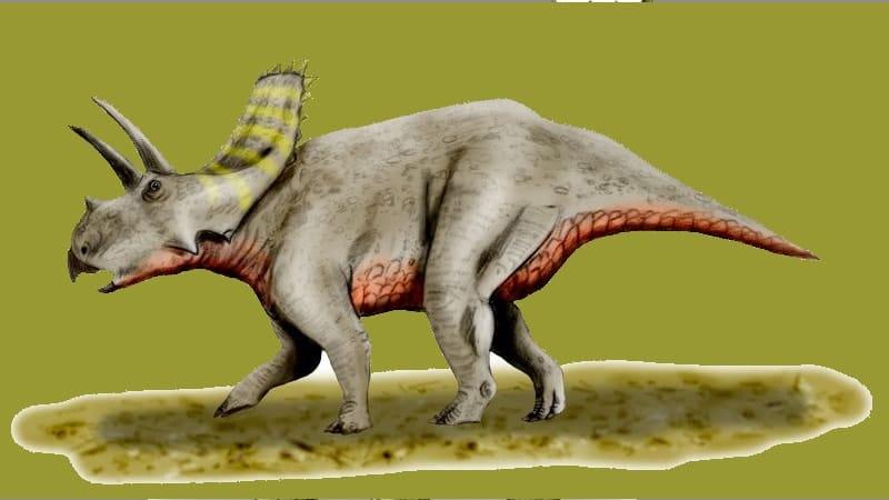 Macam macam Dinosaurus dan Namanya - Arrhinoceratops