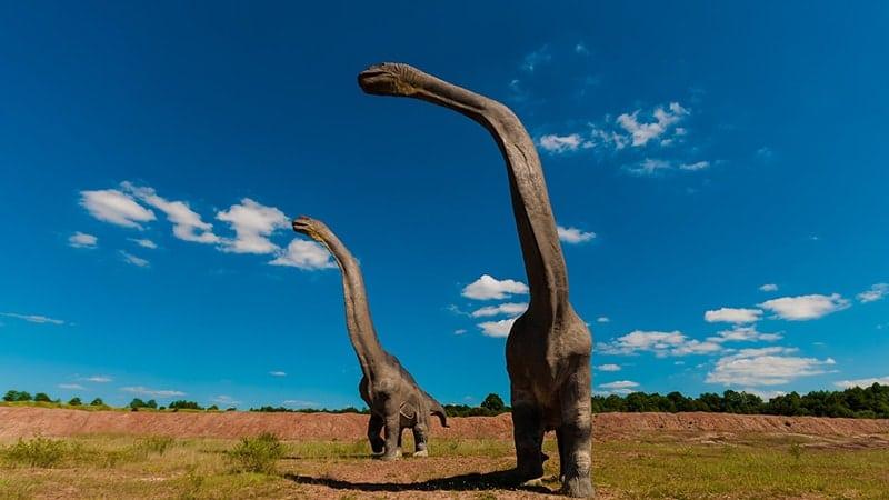 Macam Macam Dinosaurus dan Namanya - Mamenchisaurus