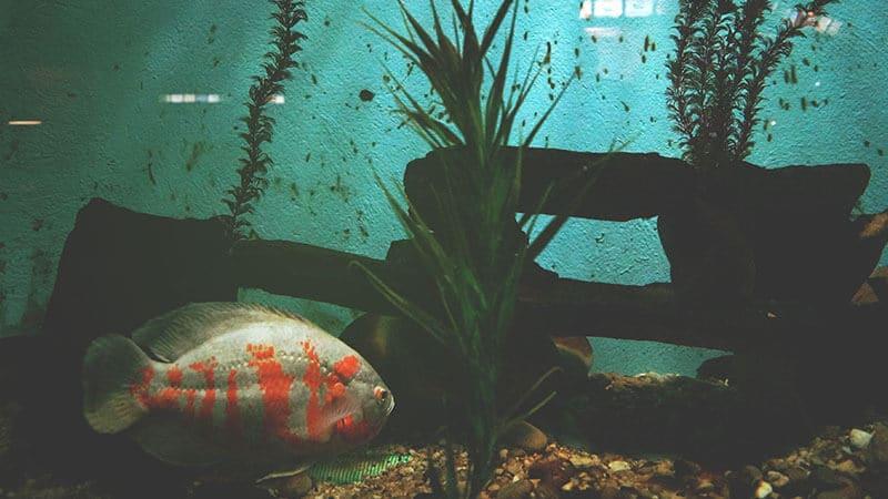 Jenis Jenis Ikan - Akuarium