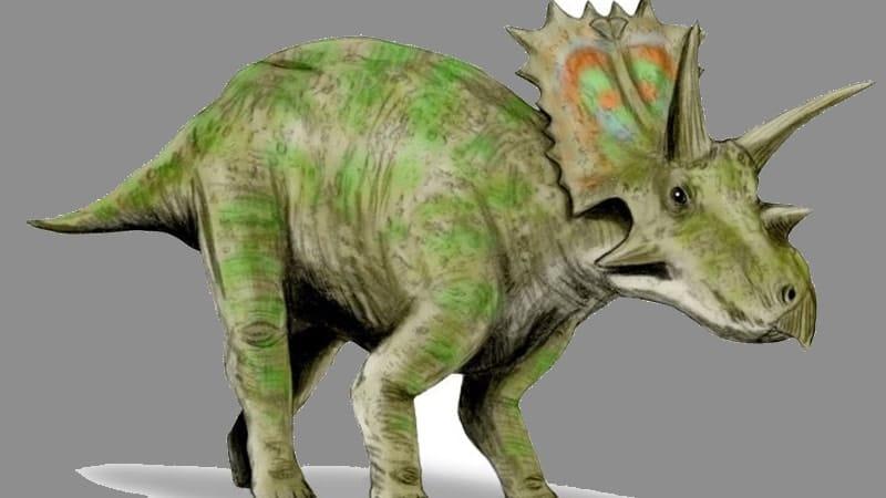 Macam macam Dinosaurus dan Namanya - Anchiceratops