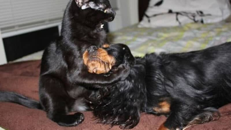 Foto anjing lucu banget - Kucing dan anjing