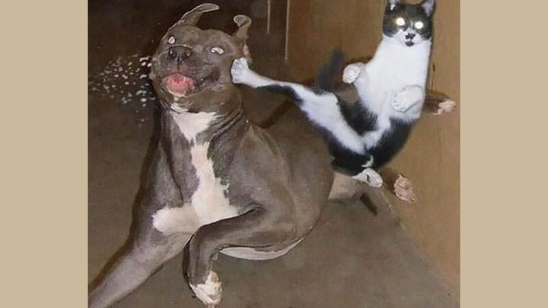 Foto anjing lucu banget - Kucing menendang anjing