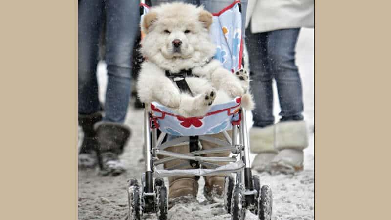 Foto anjing lucu banget - Hewan manja