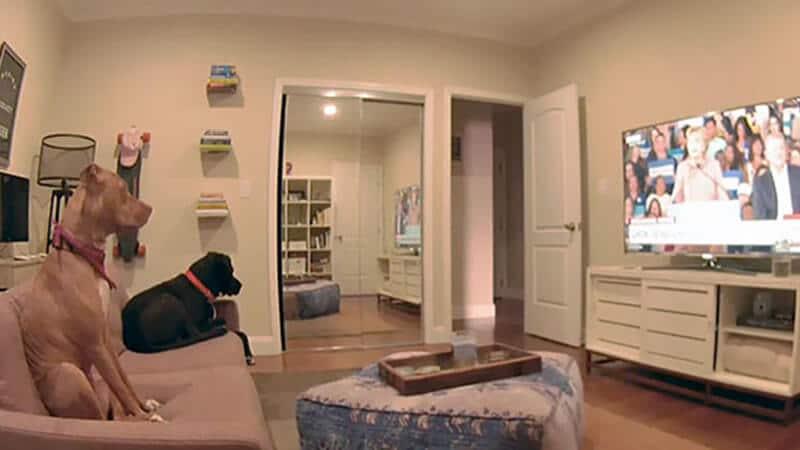 Foto anjing lucu banget - Hewan sedang menonton tv