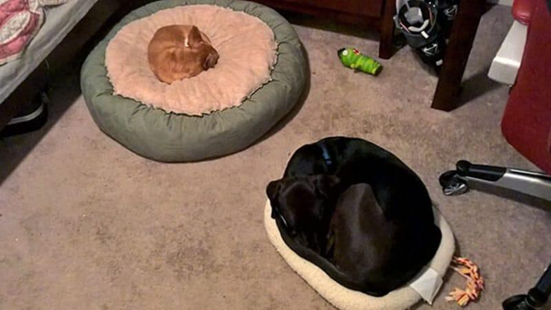 Foto anjing lucu banget - Anjing meringkuk