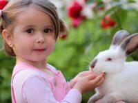 Cara Memelihara Kelinci Anggora - Gadis dan Kelinci