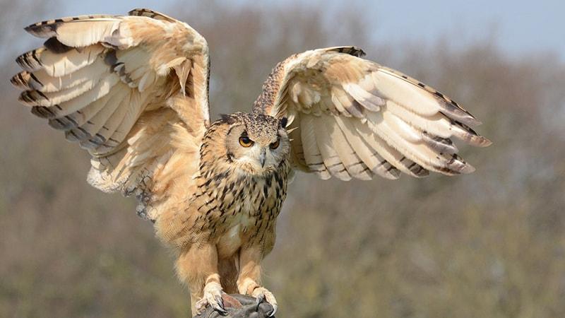43+ Gambar Burung Elang Terganas HD