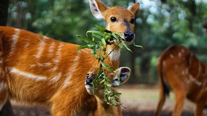 Kebun Binatang Ragunan Jakarta - Taman Satwa Anak