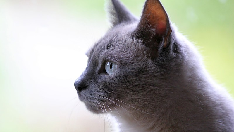 Nama-Nama Kucing Lucu - Kucing Hitam