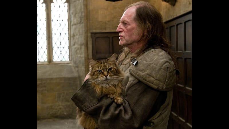 Nama-Nama Kucing Lucu - Mrs. Norris dalam Film Harry Potter