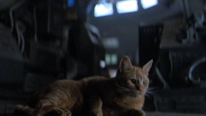 Nama-Nama Kucing Lucu - Jonesy dalam Film Alien