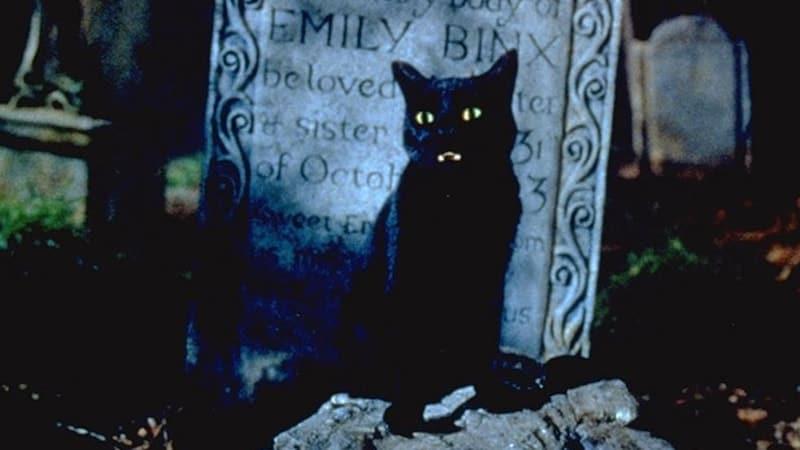 Nama-Nama Kucing Lucu - Thackery Binx dalam Film Hocus Pocus