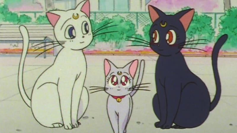 Nama-Nama Kucing Lucu - Artemis, Luna, dan Diana dalam Film Sailor Moon