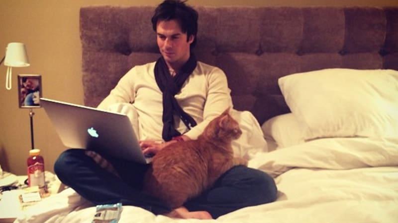 Nama-Nama Kucing Lucu - Moke Milik Ian Somerhalder