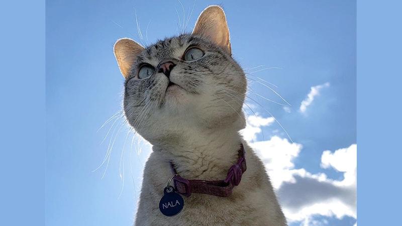 Nama-Nama Kucing Lucu - Nala