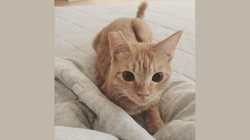 Inspirasi Nama Nama Kucing Lucu Untuk Peliharaanmu Kepogaul