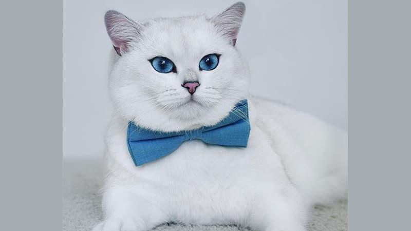 Nama-Nama Kucing Lucu - Coby